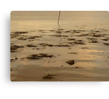 Ripples In The Evening Sun Canvas Print