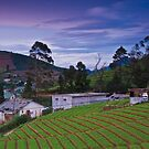 Nuwara Eliya - Sri Lanka by Adrian Rachele