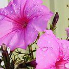 Pink Petunias by lareejc