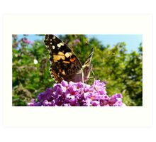 Vanessa cardui or Madame Butterfly Art Print