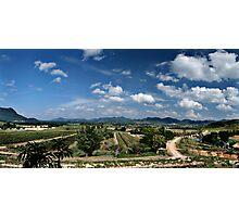 Vineyard Vista Photographic Print
