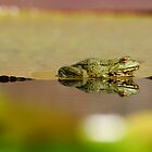 frogs paradies II by mc27