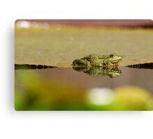 frogs paradies II Canvas Print
