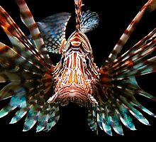 LIONFISH by Michael Sheridan