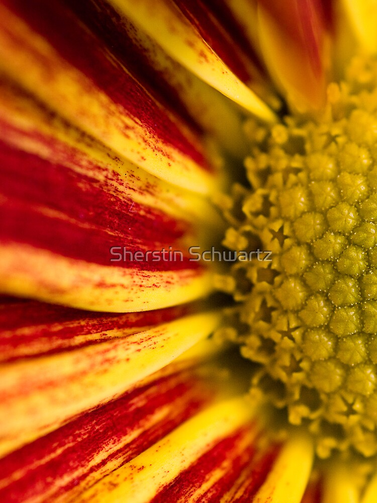 Autumn Says Hello.  by Sherstin Schwartz
