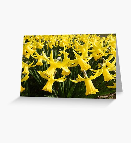 Daffodils 1 by Amber Feng Shui Art Greeting Card