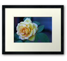 The Friendship Rose Framed Print