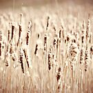 Cat Tails by sara montour