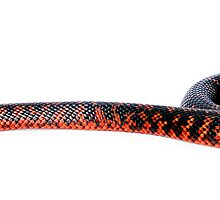 Collett's Snake (Pseudechis colletti) by Shannon Benson