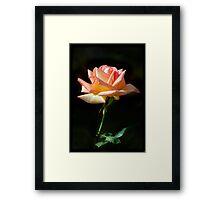Rose of St James Framed Print