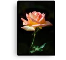Rose of St James Canvas Print