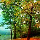 Beautiful Trees  by LudaNayvelt