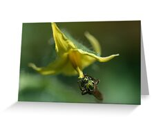 Tiny Insect Clinging to Tomato Flower, Looking Glittery Greeting Card