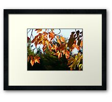 Leaf Curtain Framed Print