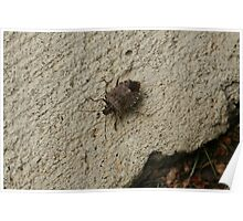Stinkbug (I Didn't Know That's What It Was) Catch and Release Poster