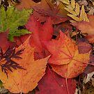Fallen Colors by BarbL