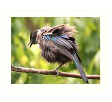 Tui......OK,  what comedian stole my other leg......? Art Print