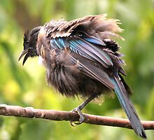 Tui......OK,  what comedian stole my other leg......? by Roy  Massicks