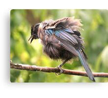 Tui......OK,  what comedian stole my other leg......? Metal Print