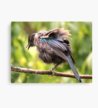 Tui......OK,  what comedian stole my other leg......? Canvas Print