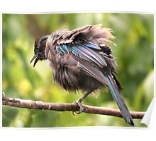 Tui......OK,  what comedian stole my other leg......? Poster