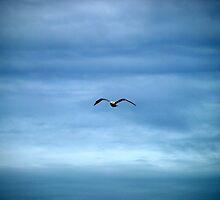 Ocean Blues by kimbarose