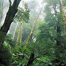 Rainforest, Yarra Ranges NP, Victoria. by Ern Mainka