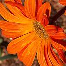 Orange Beauty by Abbey Bolton