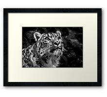 Black & White Snow Leopard Framed Print