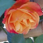 ORANGE ROSE PHOTO by SANDRA BROWN
