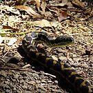 PythonsPatterns by Beccaboo