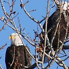 Two Eagles by tkrosevear