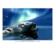 """""""Aurora Dreaming"""" Polar Bear & Aurora Photographic Print"""