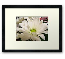pretty white daisy flower pattern. nature garden, floral photography. Framed Print