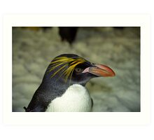 Profile of a Penguin Art Print