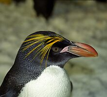 Profile of a Penguin by Kristin Nichole Hamm