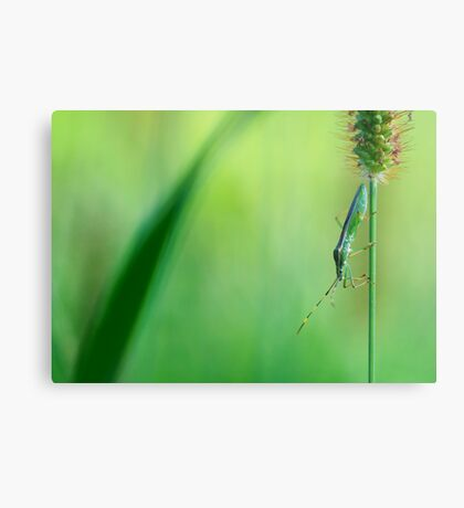 Insect on a grass stalk, Aoyama, Tokyo, Japan Metal Print
