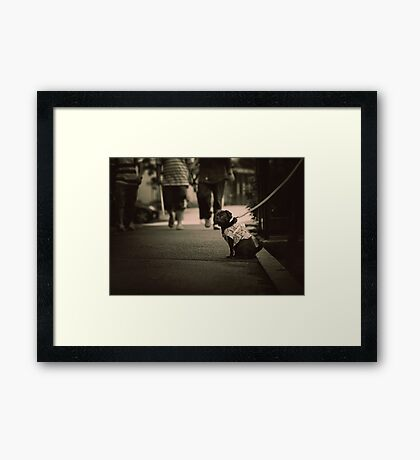 Cute dog with attitude, Tokyo, Japan Framed Print