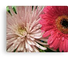 pretty light pink chrysanthemum and pink daisy flowers picture. Canvas Print