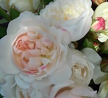 Gorgeous white and pink old fashioned roses by soniamattson