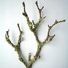 Lichen by Shara