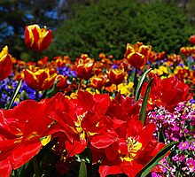 The Colours of Floriade by K Futol