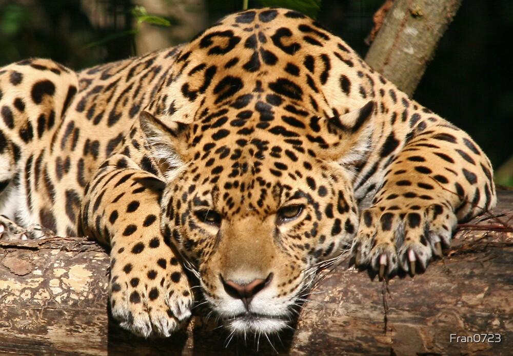 Jaguar by Fran0723