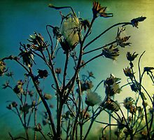 Dried weeds by Ray Smith