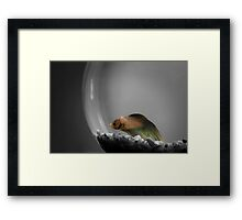 Living in a Bubble Framed Print