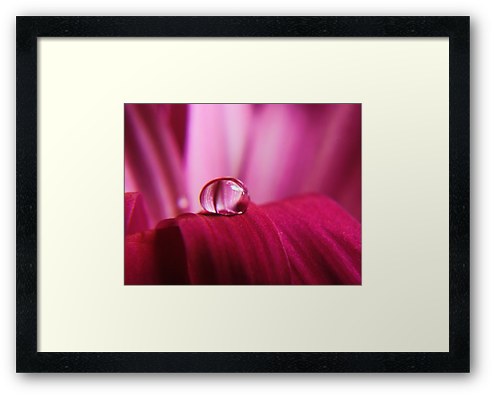 PINK Collection for the Cure - Pink reflections by trwphotography