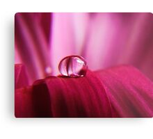 PINK Collection for the Cure - Pink reflections Metal Print