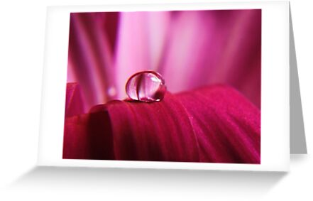 PINK Collection for the Cure - Pink reflections by Ella Hall