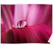 PINK Collection for the Cure - Pink reflections Poster