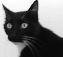 Diamant the black and white cat by boldoflorine